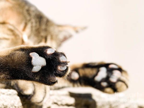 Nap Wall Art - Photograph - Cat Break by Sinisa Botas