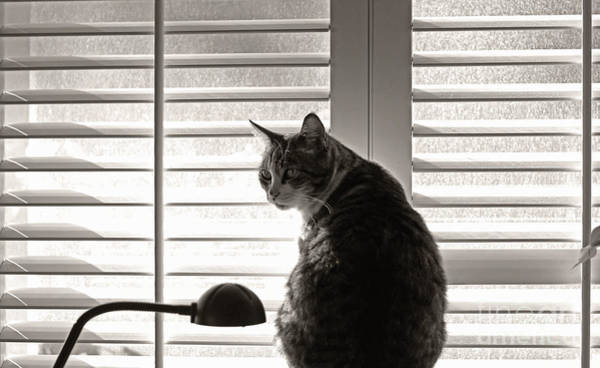 Wall Art - Photograph - Cat By Window by Charline Xia