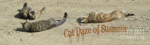 Cat Daze Of Summer Art Print