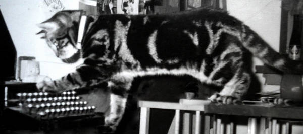 Photograph - Cat Dimitri Learning To Write On The Old Fashion Type Writer by Colette V Hera  Guggenheim