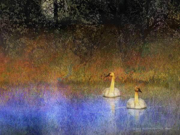 Trumpeter Swan Painting - Cat Eye Moon On Swan Pond by R christopher Vest