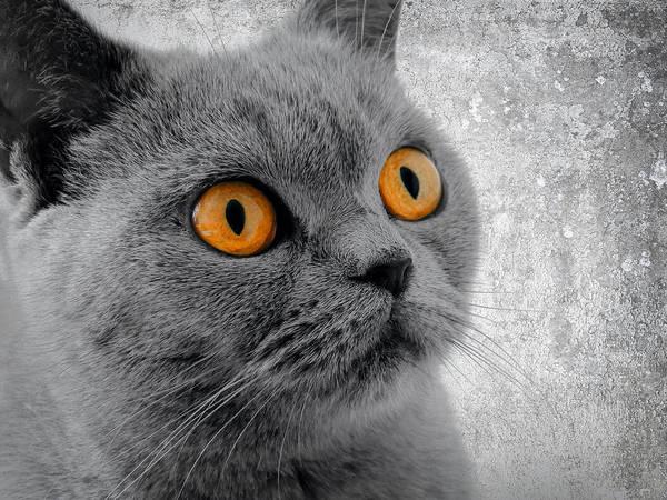Eyeball Digital Art - Cat Eyes by Daniel Hagerman