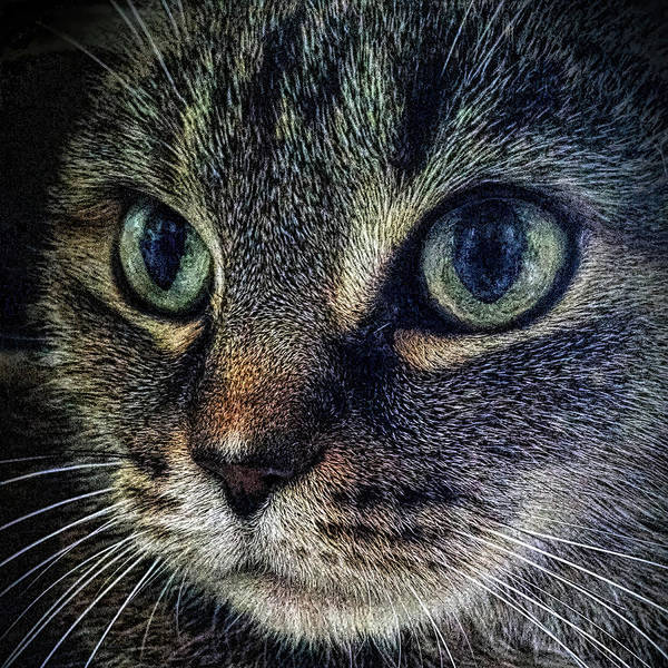 Photograph - Cat Eyes by Donna Proctor