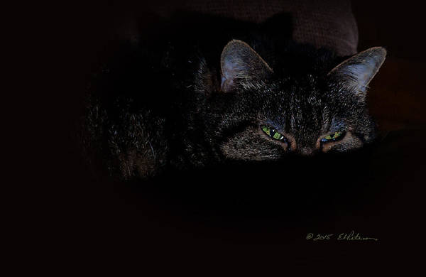 Photograph - Cat Eyes by Edward Peterson