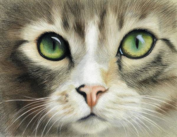 Tabby Drawing - Cat Eyes by Heather Mitchell