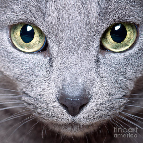 Blue Hair Wall Art - Photograph - Cat Eyes by Nailia Schwarz