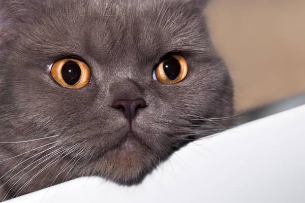 Photograph - Cat by Gouzel -