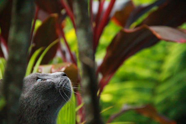 Photograph - Cat Hunting by Debbie Cundy