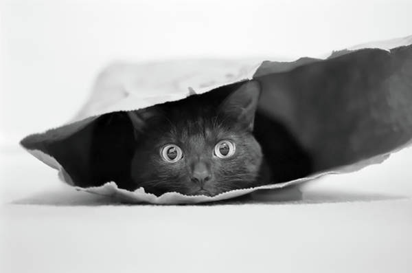 Cat Eyes Wall Art - Photograph - Cat In A Bag by Jeremy Holthuysen