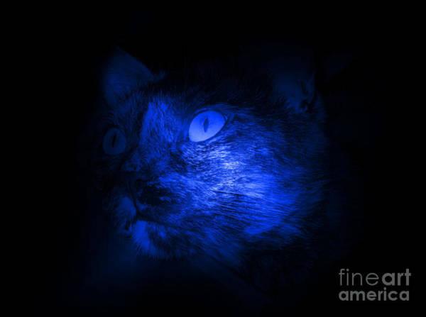 Photograph - Cat Face In Blue Black by Oksana Semenchenko