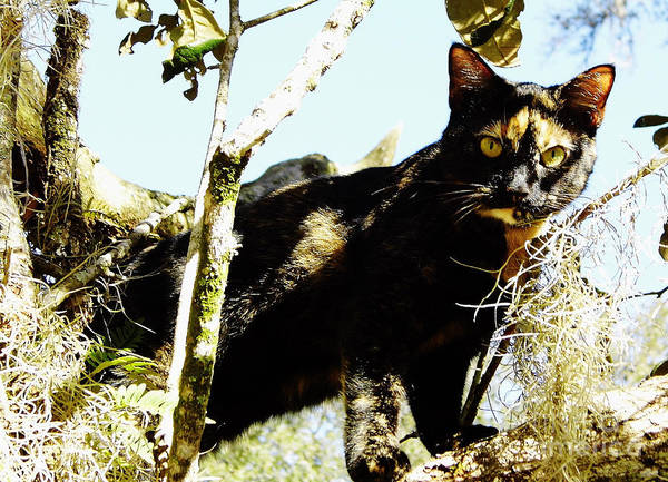 Photograph - Cat - In - A - Tree by D Hackett