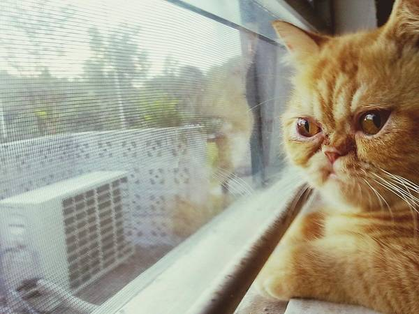 Ugliness Photograph - Cat Looking Through Window by Silvie Meilina / Eyeem