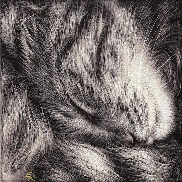 Mixed Media - Cat Nap by Elena Kolotusha