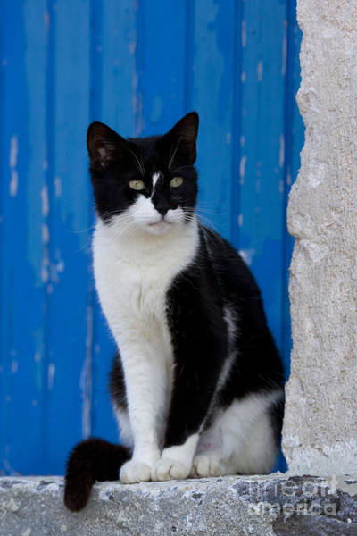 Photograph - Cat On A Greek Island by Jean-Louis Klein and Marie-Luce Hubert