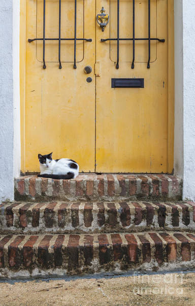 Photograph - Cat On Steps In Front Of Door In Old San Juan Puerto Rico by Bryan Mullennix