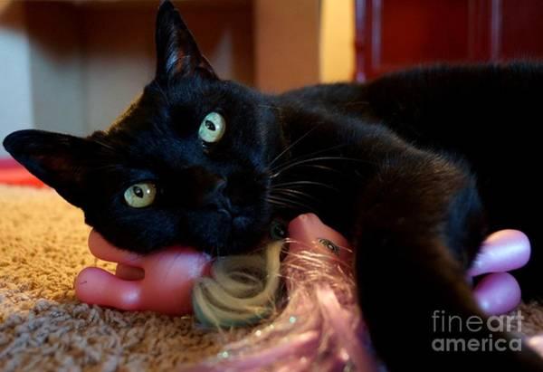 Photograph - Cat Pony Love by Kerri Mortenson