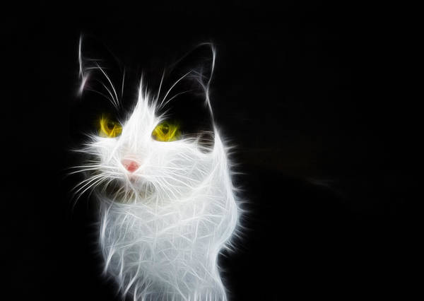 Photograph - Cat Portrait Fractal Artwork by Matthias Hauser