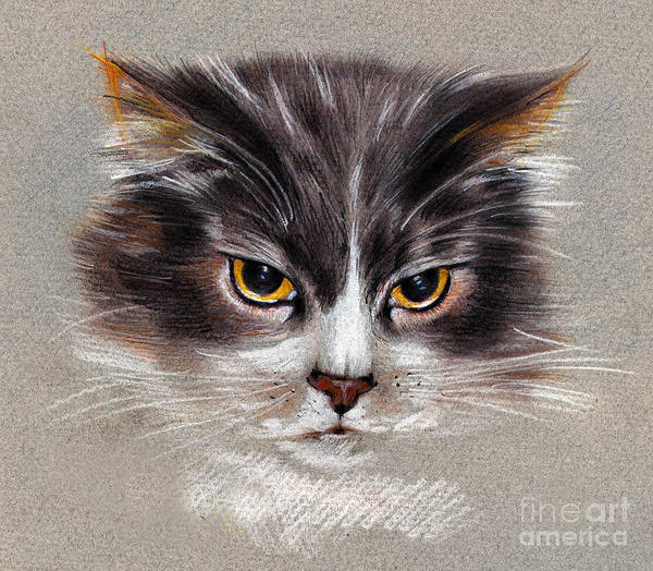 Cat Portrait Yellow Eyes Art Print