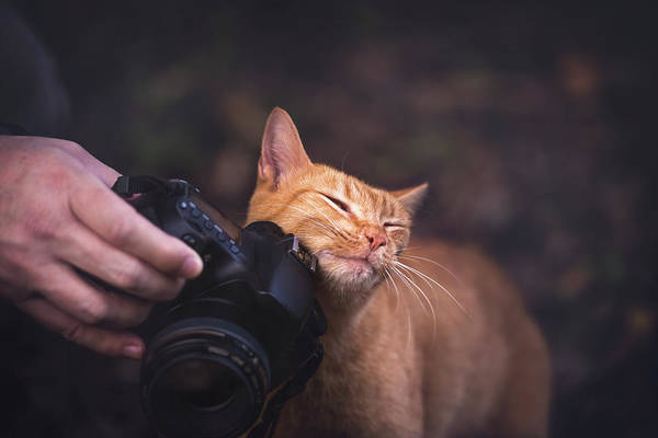 Ginger Cat Photograph - Cat Rubbing On Camera by Ktsdesign/science Photo Library