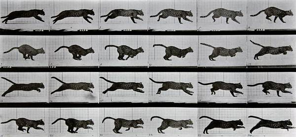 Wall Art - Photograph - Cat Running by Eadweard Muybridge