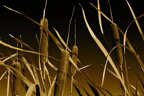 Tan Cat Wall Art - Photograph - Cat Tails by Angie Wingerd