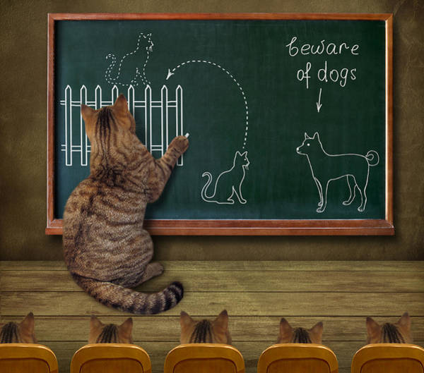 Humor Wall Art - Photograph - Cat Teacher And His Pupils... :) by Iryna Kuznetsova (iridi)