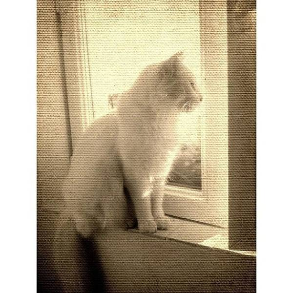 Beautiful Photograph - #cat #vintage #white by Georgia Fowler