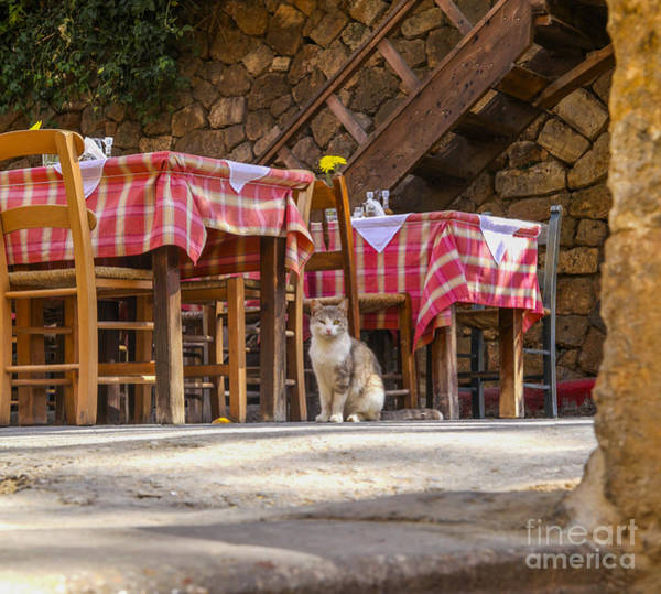 Taverna Photograph - Cat Waiting For Guests In Restaurant by Patricia Hofmeester