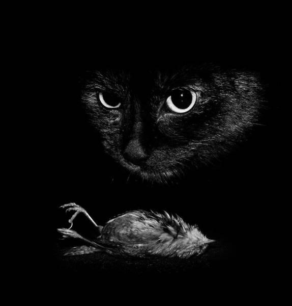 Wren Photograph - Cat With A Dead Bird by Cordelia Molloy