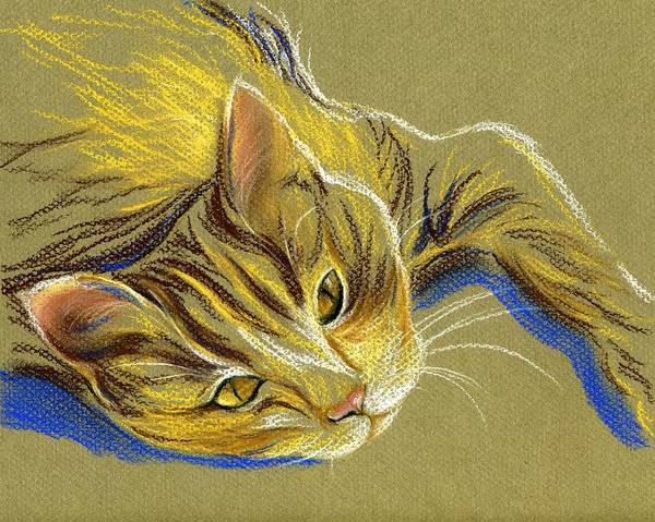 Pastel - Cat With Gold Eyes by MM Anderson