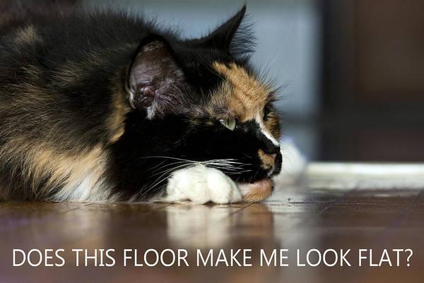 Parody Photograph - Cat Worries by Barbara  White