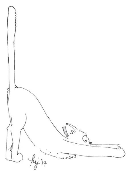 Drawing - Cat Yoga by Mike Jory
