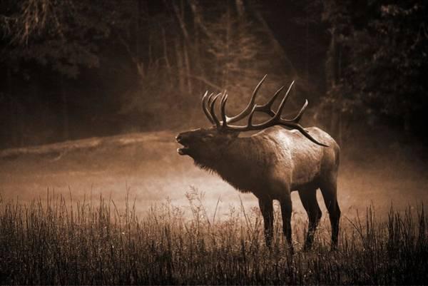 The Great Smoky Mountains Wall Art - Photograph - Cataloochee Bull Elk In Sepia by Carol Montoya