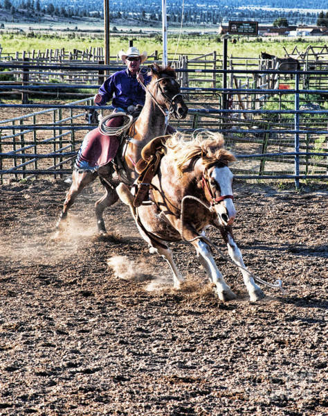 Photograph - Catching A Bronco by Brenda Kean