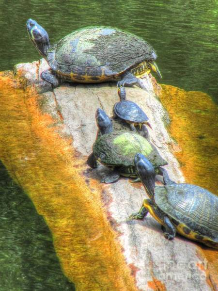 Nc State Wall Art - Photograph - Catching Some Rays by Jaclyn Hughes Fine Art