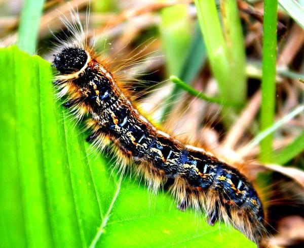 Photograph - Caterpillar Crawl by Candice Trimble