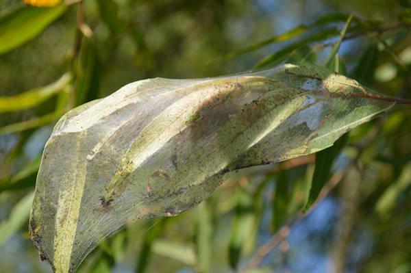 Caterpillars In The Trees Art Print