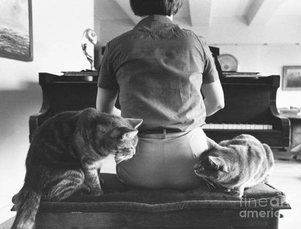Photograph - Cats Critique Piano Playing by Joan Baron