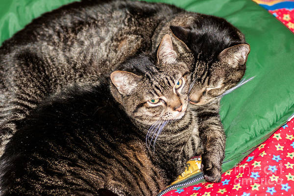 Photograph - Cats Cuddling by Sue Smith
