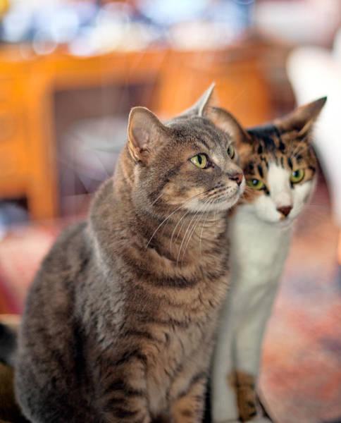 Photograph - Cats by Dan McManus