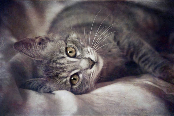 Wall Art - Photograph - Cat's Eyes #01 by Loriental Photography