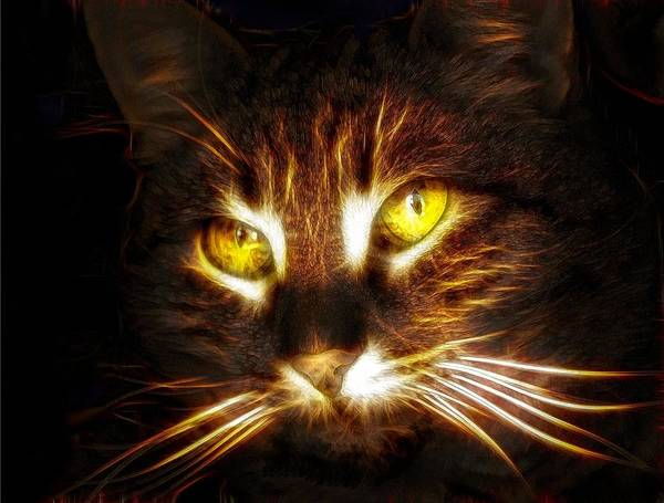 Cool Cat Digital Art - Cat's Eyes - Fractal by Lilia D