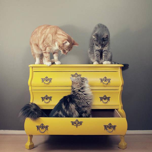 Drawers Photograph - Cats Sitting On Cabinet by Paula Daniëlse