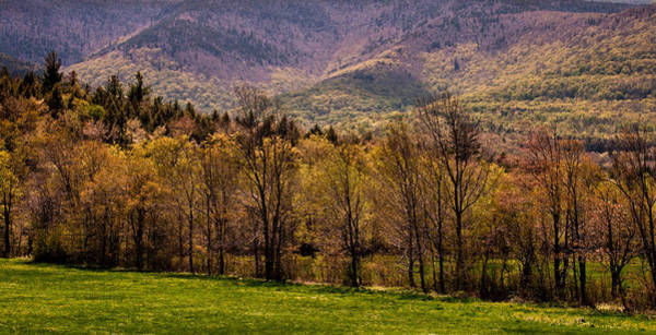 Photograph - Catskills Woodland Glow by Nancy De Flon