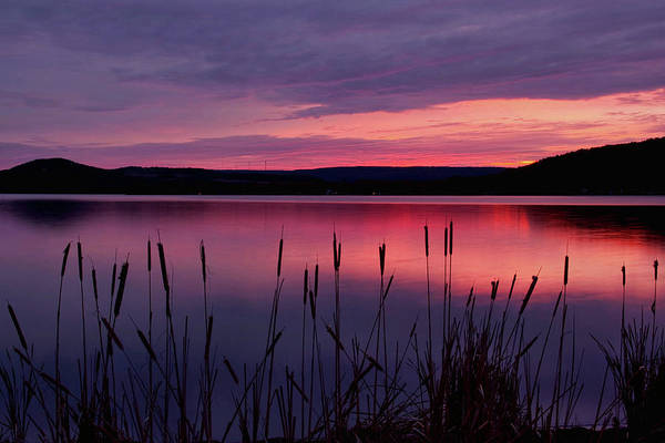 Photograph - Cattails In The Gloaming by Theo OConnor