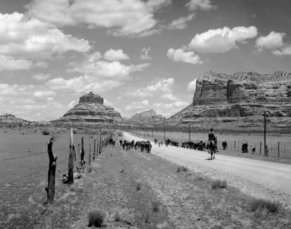 Village Creek Photograph - Cattle Drive by Bob Bradshaw