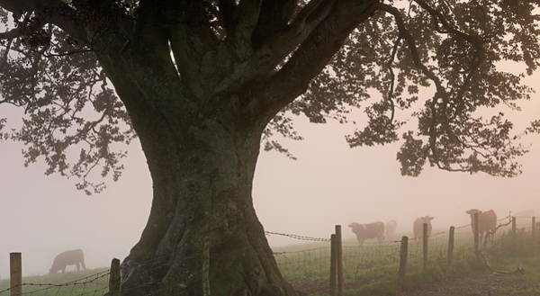 Grazing Photograph - Cattle Grazing In A Field Beside An by Adam Burton / Robertharding