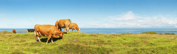 Wall Art - Photograph - Cattle Grazing In Picturesque Meadow by Fotovoyager