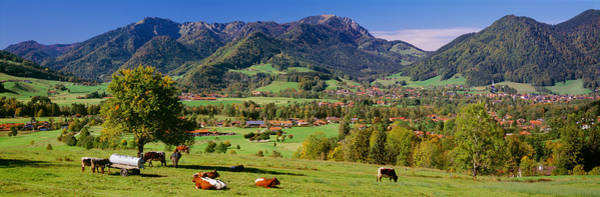 Wall Art - Photograph - Cattle In A Field With Mountain Range by Panoramic Images