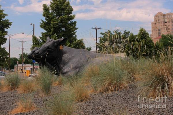 Denver Art Museum Photograph - Cattle In Downtown Denver by John Malone